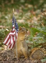 Patriotic Squirel